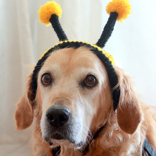 Bumble Bee Dog Headband