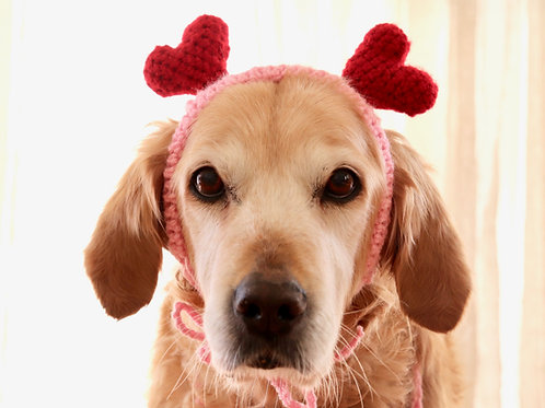 Heart Headband for Dogs
