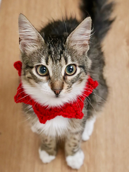 Elf Collar for Cats