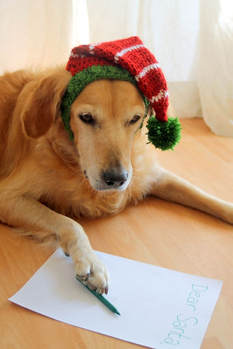 Contact Us Photo of a Dog Wearing a Elf Hat Writing a Letter to Santa