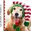 Thumbnail: Elf Dog Hat Crochet Pattern