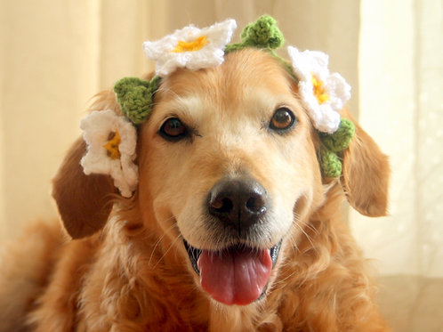 White Flower Crown / Collar for Dogs