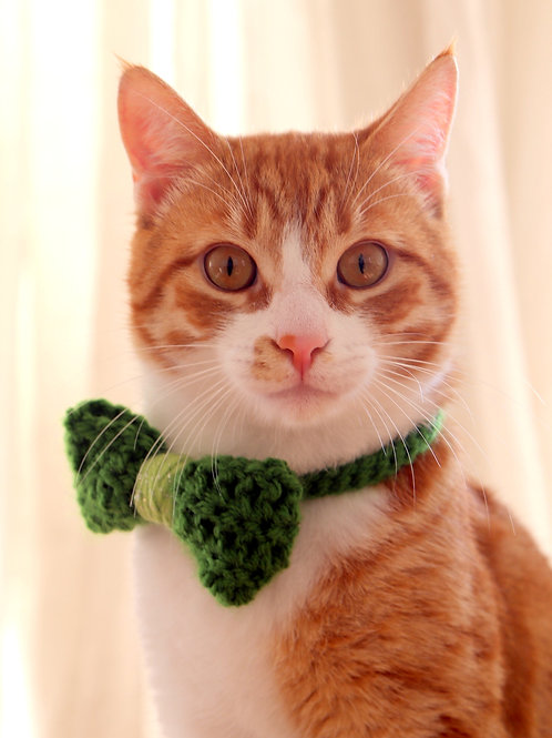 St. Patrick's Day Bow Tie for Cats