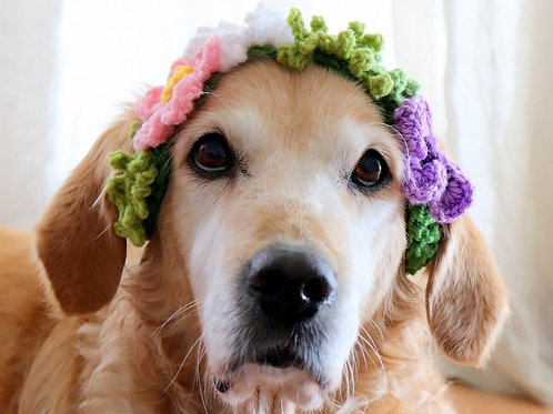 Flower Crown / Collar for Large Dogs