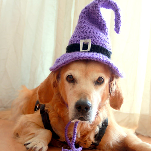 Purple Witch Hat for Large Breed Dogs
