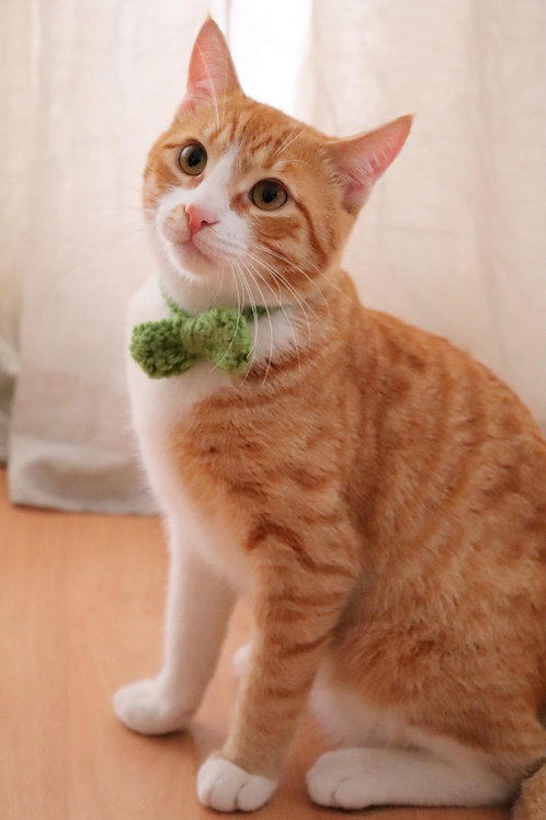 Bow / Bowtie for Cats and Small Dogs
