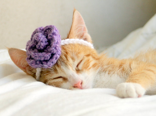 Flower Headband or Collar for Cats and Small Dogs