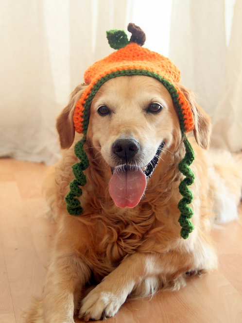 Pumpkin Hat for Dogs