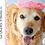 Thumbnail: Pet Crown Crochet Pattern