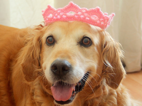Crown for Medium & Large Dog Breeds