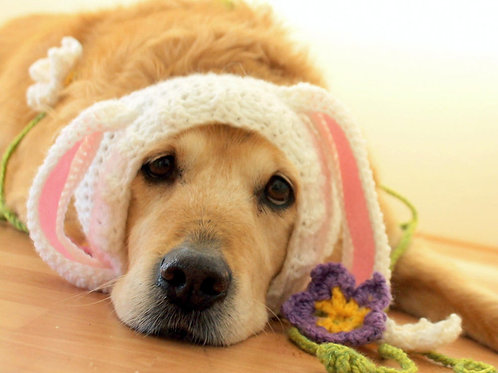 Easter Bunny Snood for Dogs