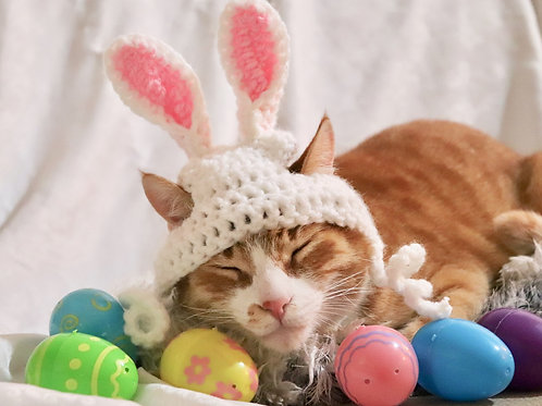 Easter Bunny Ears for Cats
