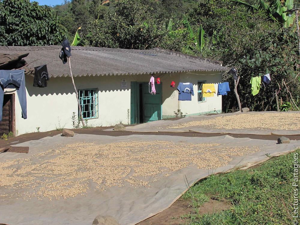 Séchage du café à Quebrada Honda