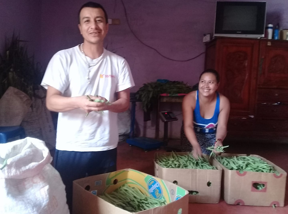 Billy y Doralia en su casa empacando habichuelas
