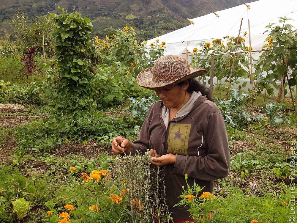 Récolte de semences sur la parcelle communautaire