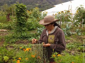 Réinventer la paysannerie à Nariño