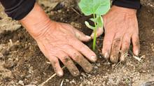 De los libros a las semillas: ¿por qué Saberes Compartidos (Lectures Partagées) hace un viraje hacia