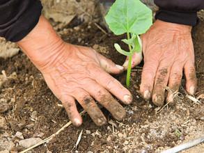 Des livres aux semences: pourquoi Lectures Partagées se tourne-elle vers l'agriculture ?