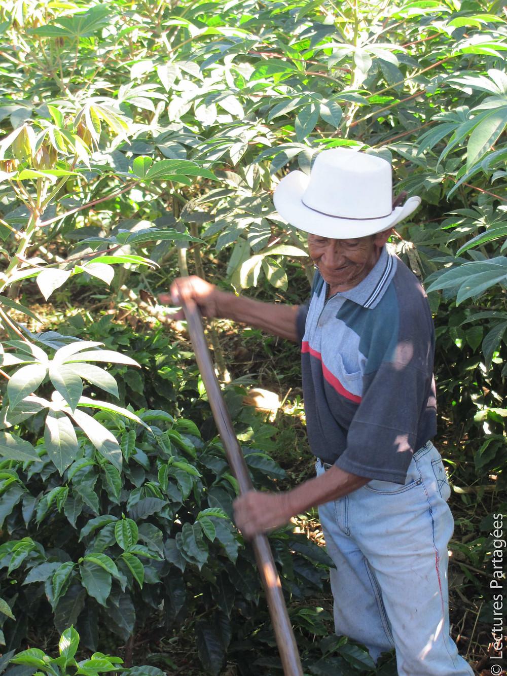 Producteur de café à l'oeuvre à Quebrada Honda