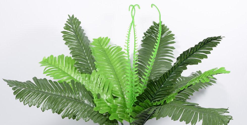 Φτέρη μικρή - Φυτό
