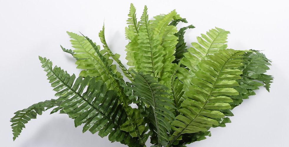 Φτέρη - Φυτό