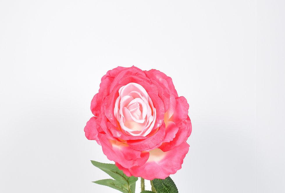 Τριαντάφυλλο - Κλωνάρι