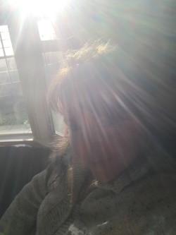 Sunlight fills my mind
