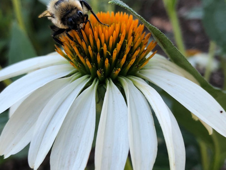 Farming with Beneficial Insects Workshop