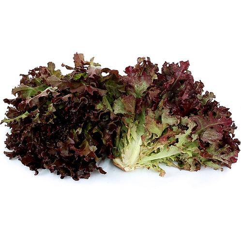 Minuet Lettuce
