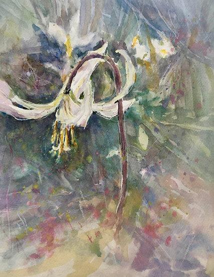 Cowichan River Fawn Lilies by Kim Dibb