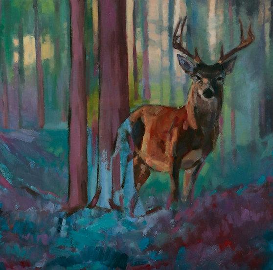 Deer by Brad Scromeda