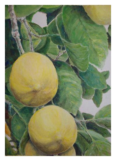 Lemon Tree by Rita Loehr