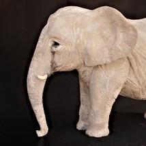 עור פיל