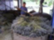 distillerie lavande 2.jpg