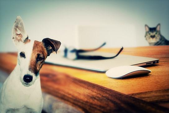 un chien, un chat : 2 partenaires qui travaillent ensemble pour un intérêt commun : le bien-être animal