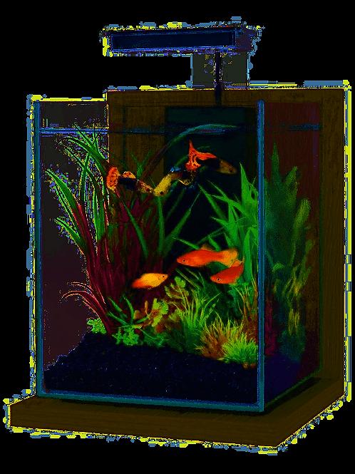 Kit aquarium Jalaya Zebrano gris