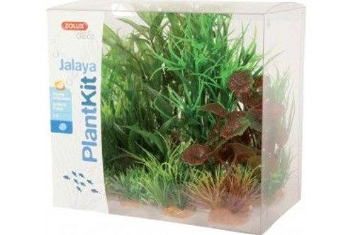 Plantkit Jalaya N2