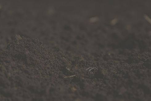 Dirt%2520Field_edited_edited.jpg