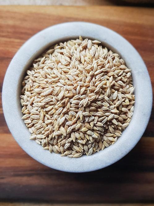 Organic Barley Grain