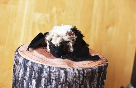 ダイトウオオコウモリの赤ちゃん