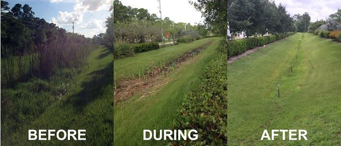Plant Removal Before and After.JPG