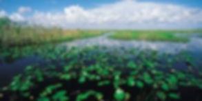 FP-Wetland.jpg