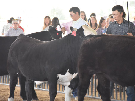 The Bent County Beef Show 2021