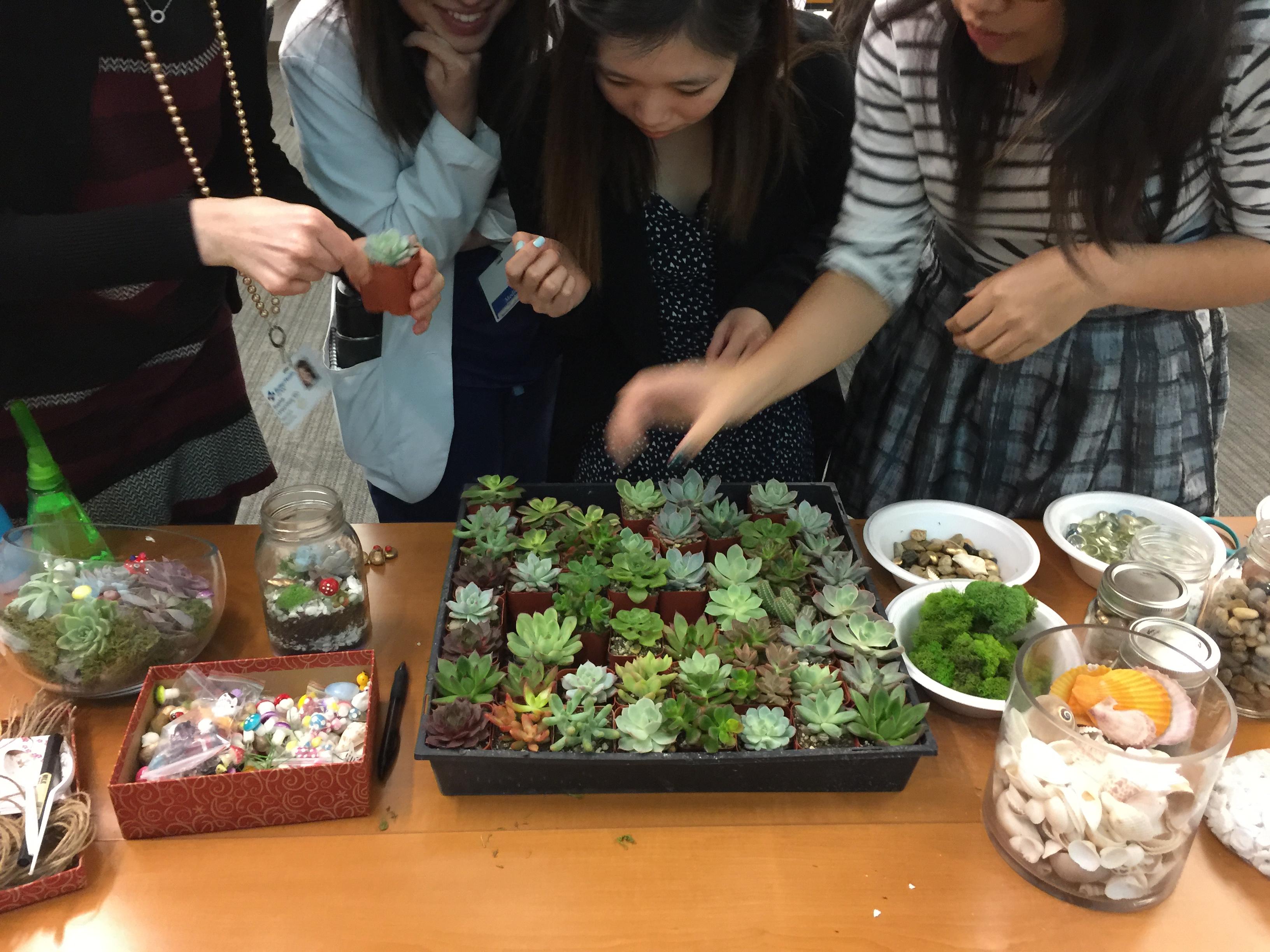 pick your succulent