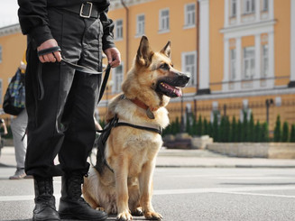 GUARD DOG UNITS, K9 PATROLS