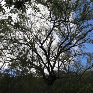 Foto: Valécia Estrela Reserva  Ecológica Olho D'água das Onças / 2021