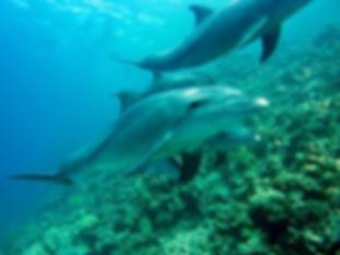 dolphins-378217__340.jpg