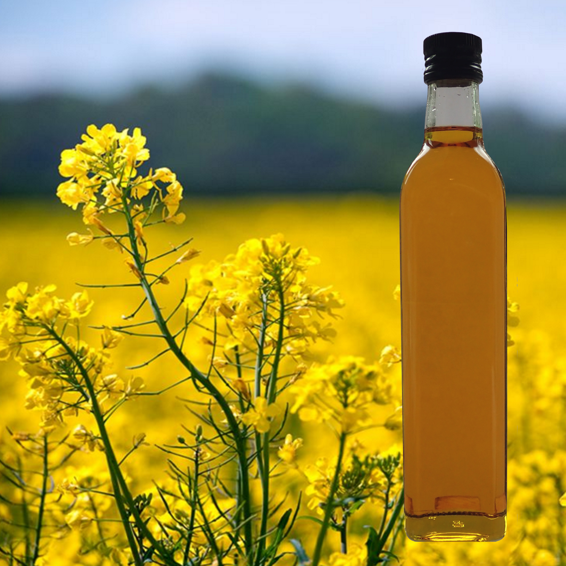 2019 0814 Rapeseed flower_oil