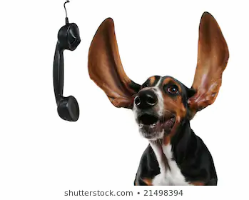 basset-hound-long-flapping-ears-260nw-21