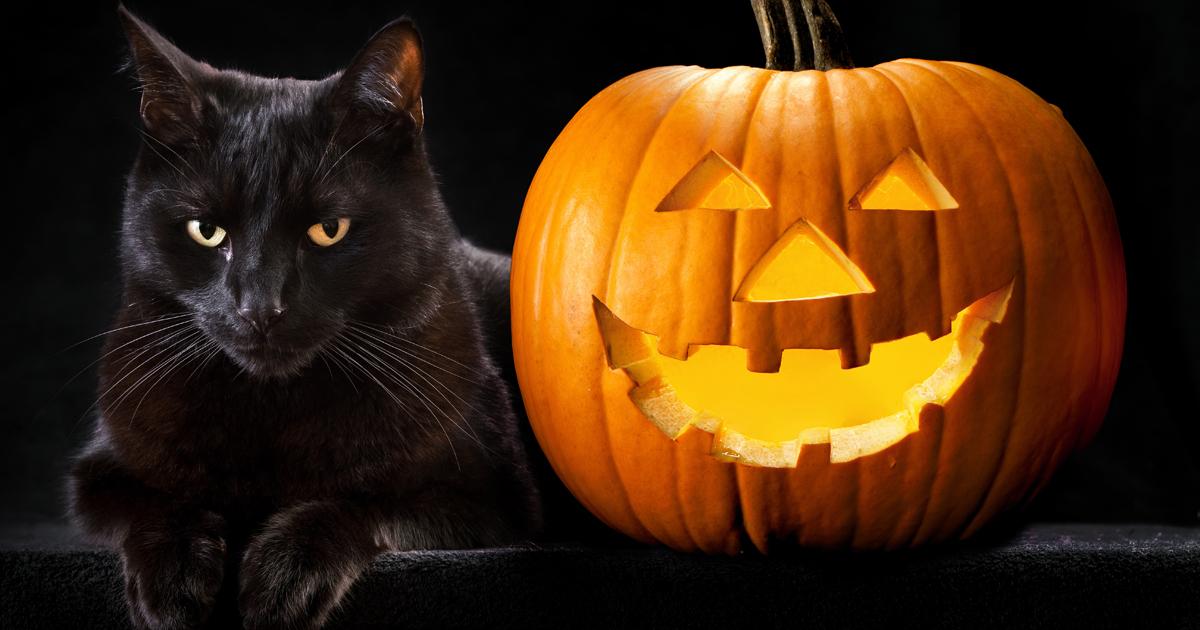 Black Cats & Halloween: Keep Them Safe! | Dog Walker and Pet ...